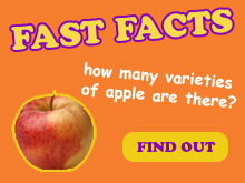 Apple Fast Fact Spotlight