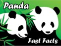 Panda Spotlight