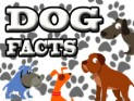 dog facts spotlight