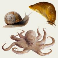 Invertebrate Facts   Squizzes  Invertebrate Fa...